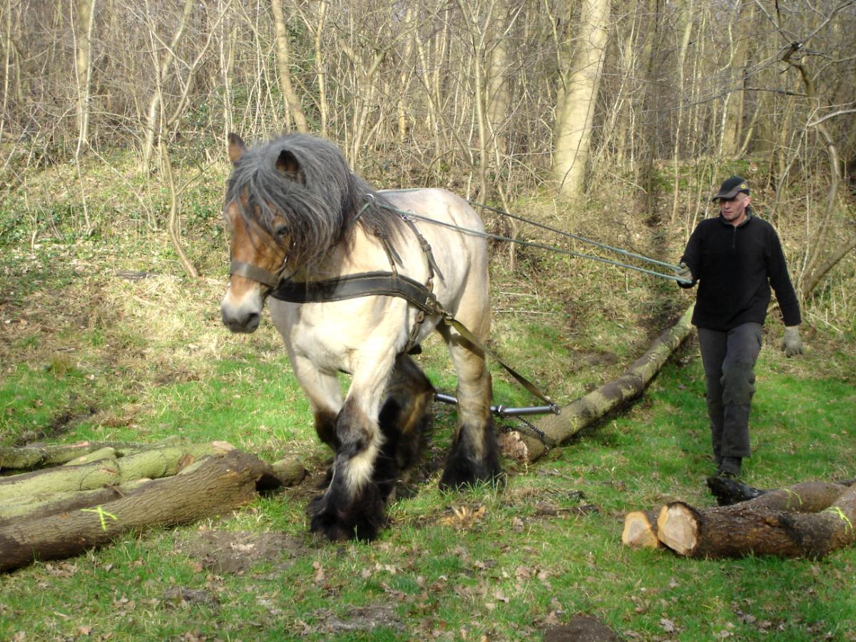 Aan de bak in Haagse bossen